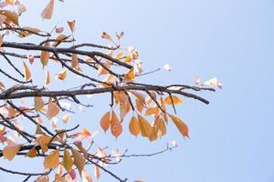 gelbe Blätter am Baum foto