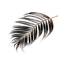 dunkles Palmblatt