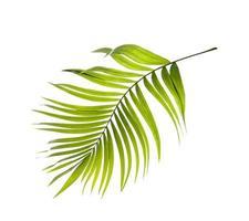 flache Lage eines Palmblattes