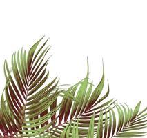 Gruppe von grünen und braunen Palmblättern