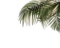 Palmenblätter auf weißem Hintergrund