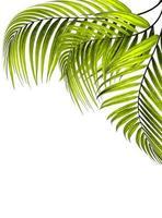 hellgrüne Blätter mit Kopierraum