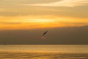 Vogel fliegt über das Meer foto
