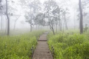Holzsteg in Thailand