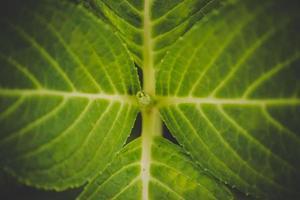 Nahaufnahme von grünem frischem Pflanzengras für Hintergrund foto