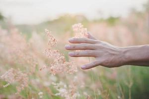 Hand berührt das Gras in einem Feld bei Sonnenuntergang
