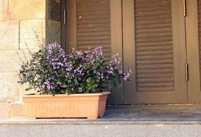Blumentopf in der Nähe von Fenster foto