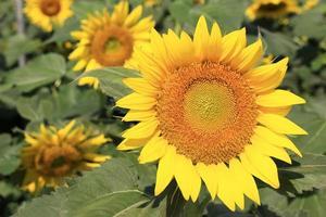 leuchtend gelbe Blüten während des Tages foto