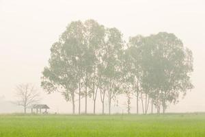 Hütte in der Mitte des Reisfeldes foto