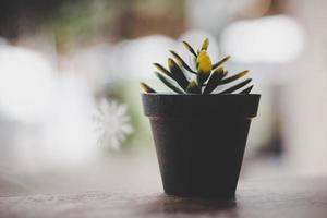 Nahaufnahme einer kleinen Pflanze mit unscharfem Caféhintergrund foto