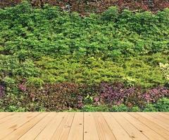 grüne Wand und Holzboden