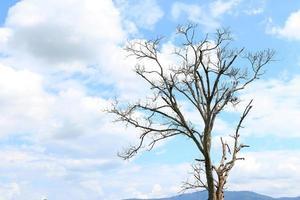 Silhouette eines Baumes foto