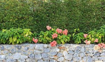 Blumen im Garten foto