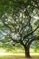 großer Baum im Schatten foto