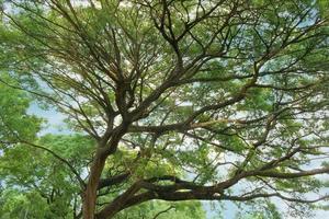 grüner großer Baum foto