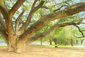 großer Baum in der Nähe von Teich foto