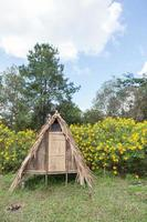Hütte auf dem Rasen
