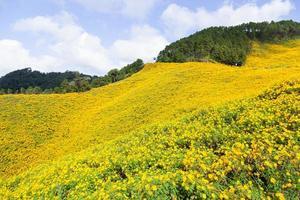 Landschaft in Thailand mit gelben Blumen