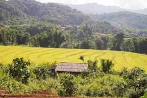 Haus bei den Reisfeldern