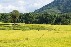 Reisfarm auf dem Berg in Thailand