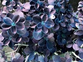 lila Blätter draußen