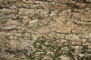 Muster der Baumrinde
