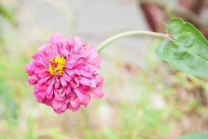 rosa Blume im Park