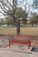 Bank unter dem Baum foto