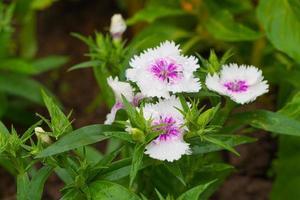 weiße und violette Blüten im Park