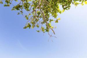 Zweige eines Baumes
