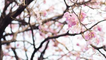 Frühlingsblütenhintergrund foto