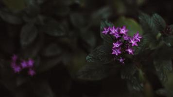 kleine lila Blüten