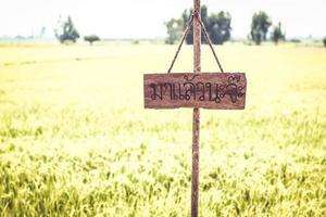 hölzernes leeres leeres Schild und Reisfeld des grünen Grases am Himmel