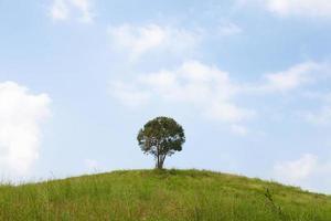 einzelner Baum auf einem Hügel foto