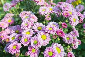 lila Blumen im Park