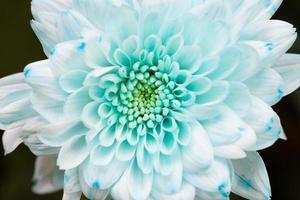 hellgelbe Staubblätter der weißen Blume foto