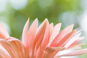 Blütenblätter der rosa Blume