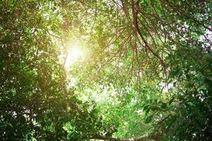 grüne Blätter so schön mit Sonnenlicht foto