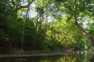 Fluss und Wald in Thailand foto