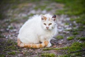 weiße Katze mit orange Schwanz, der im Schmutz und im Gras sitzt foto