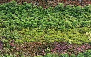 grüne vertikale Wand außerhalb
