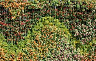bunte Blumenwand