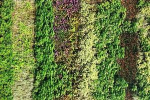Nahaufnahme des vertikalen Gartens