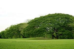 üppig grüne Landschaft foto