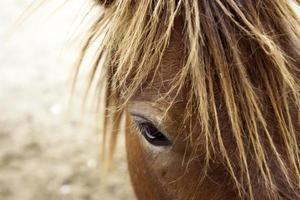 Nahaufnahme des braunen Pferdes draußen