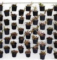 Starterpflanzen in Töpfen