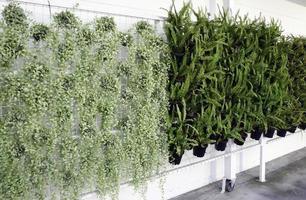 grüne Topfpflanzen an der Wand