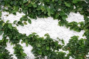 Blätter an der Wand foto