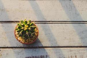Kaktusansicht von oben foto