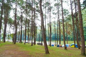Campingplatz unter den Kiefern in Thailand foto